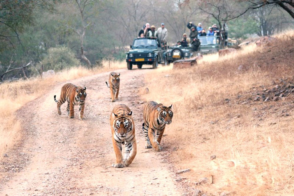 Kanha Jungle Safari, India Tiger Tours