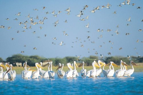 bird sanctuary india